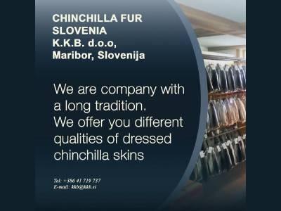 CHINCHILLA FUR SLOVENIA